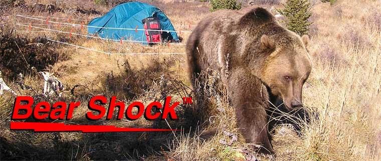 Testify Bear Shock